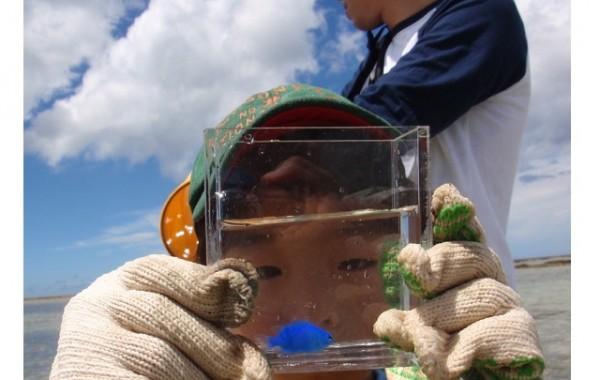 自由研究テーマは「沖縄の海の生き物」
